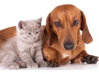 Curso de patologia veterinária de cães e gatos
