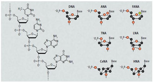 Genética sintética